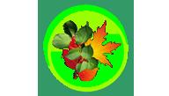 Другие лиственные