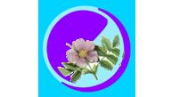 Розоцветные кустарники